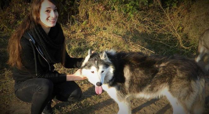 Promenade sportive pour vos compagnons !, dog sitter à Angers