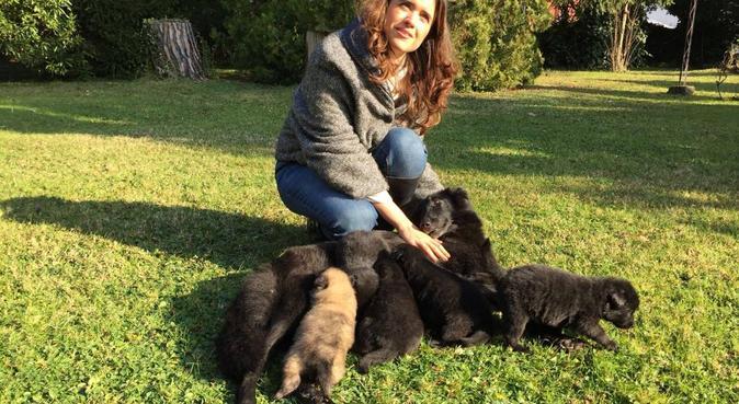 Passeggiate a 6 zampe, dog sitter a Padova