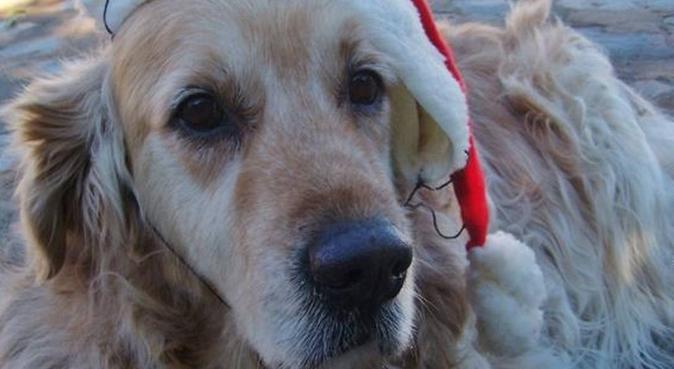 Liefdevolle en speelse hondenoppas in Breda, hondenoppas in Breda