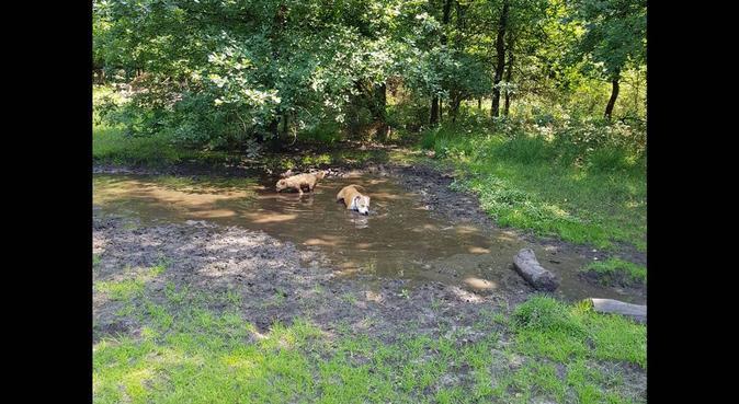 Simone wandelt graag met uw honden!, hondenoppas in Velp