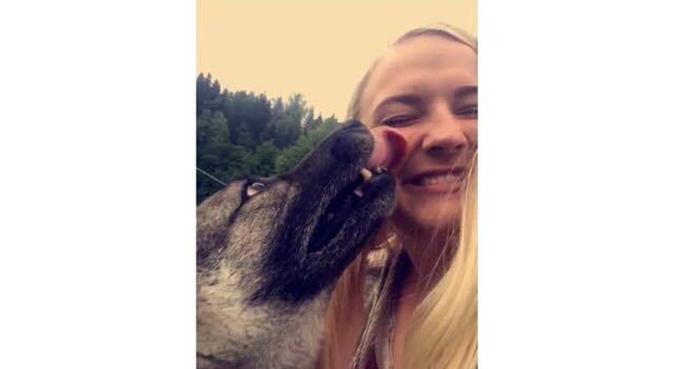 Hundeelsker søker hundevenn og selskap, hundepassere i Oslo