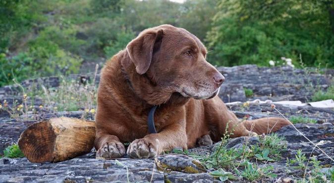 Turglad hundeentusiast :), hundepassere i Bergen