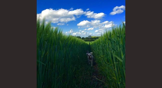 Edinburgh Students With Veterinary Experience, dog sitter in Edinburgh