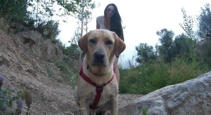 Paraíso perruno muy acogedor, canguro en Alhama de Murcia