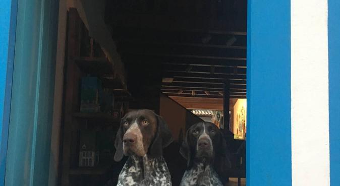 Des papouilles et des promenades à gogo, dog sitter à Courbevoie, France
