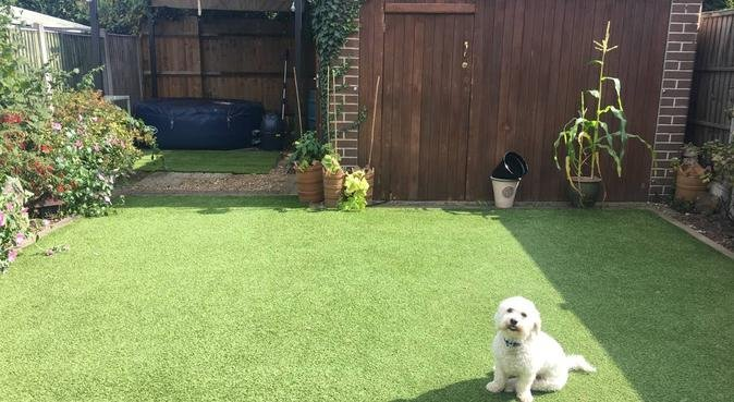 Love, care and comfort, dog sitter in Ashford