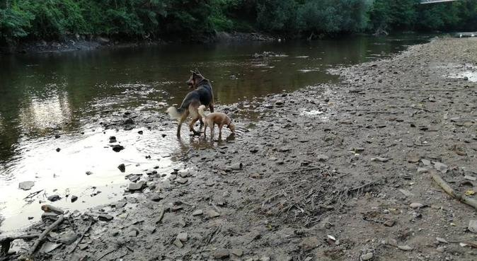 Dans les Yeux des Chiens ✨, dog sitter à Montpellier, France