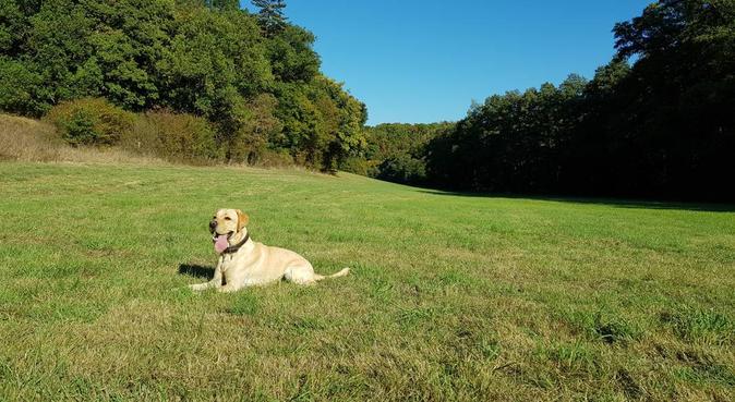 Friendly & Flexibel Dogwalker Den Haag, hondenoppas in Den Haag, Niederlande