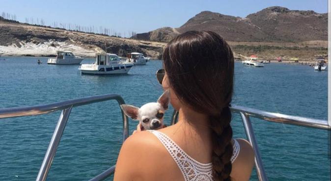 Paseos súper divertidos para tus perros, canguro en Granada
