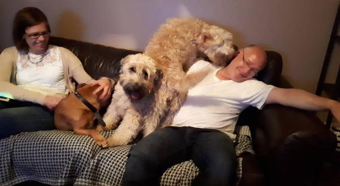 Home from home break for your dogs., dog sitter in Cheshunt