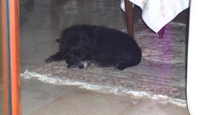 Passeggiate diurne e/o serali con i vostri cani, dog sitter a Valenzano