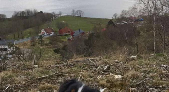 Omsorg og tur, aldri sur!, hundepassere i Bergen, Norge