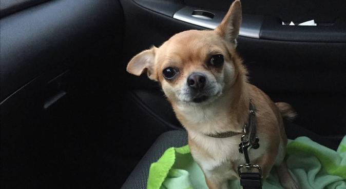 Nos amis à poils, dog sitter à Soisy-sous-Montmorency