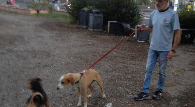 Date all'uomo un cane e la sua anima sarà guarita., dog sitter a Catania