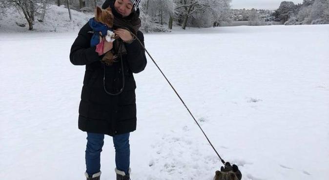 Dogs' big sister in Stockholm!, hundvakt nära Bromma