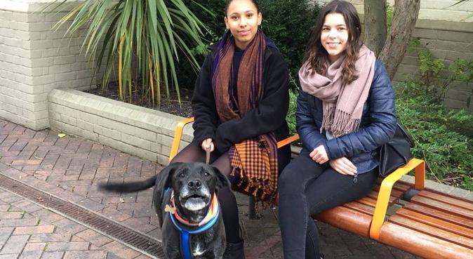 Doggo Whisperer, dog sitter in Canterbury, UK