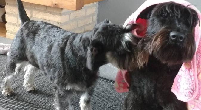 Happy paws Leiderdorp, hondenoppas in Leiderdorp