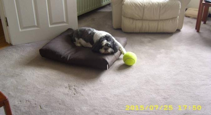 Doggy Haven, dog sitter in Bromley    Kent