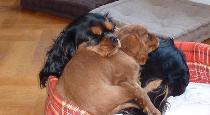 Etudiante responsable et passionnée !, dog sitter à Betton