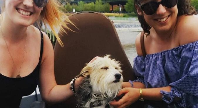 Dog walkies in Hoxton, dog sitter in London