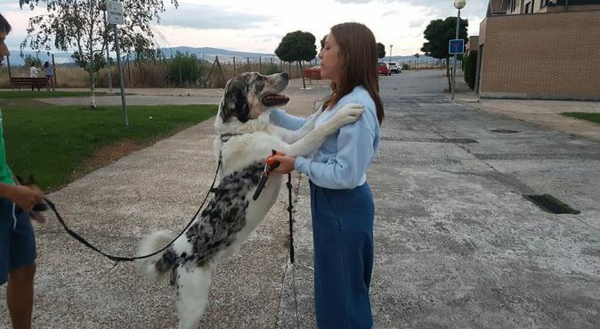La compañera perfecta!, canguro en Málaga