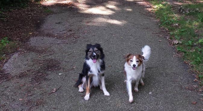 Liefdevolle hondenoppas in Groningen, Hundesitter in Groningen