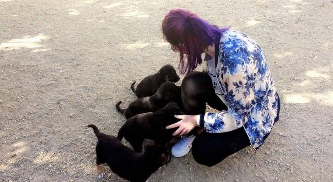 Jolie promenade canine sur Chambéry, dog sitter à Chambéry
