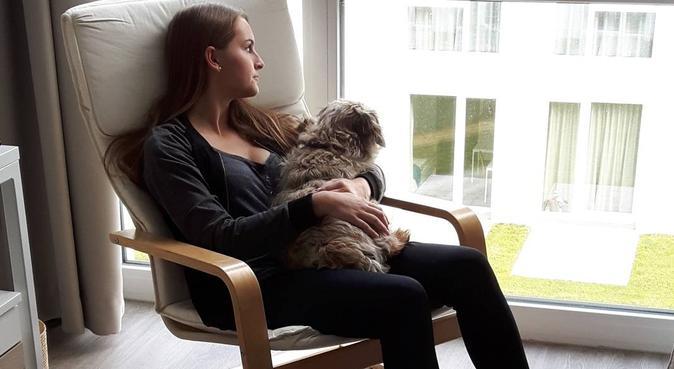 Vierbeinige Gesellschaft - mehr als nur ein Job, Hundesitter in Kiel