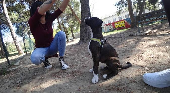Coccole attenzioni e passeggiate con amore... MILA, dog sitter a Pescara del Tronto, AP, Italia