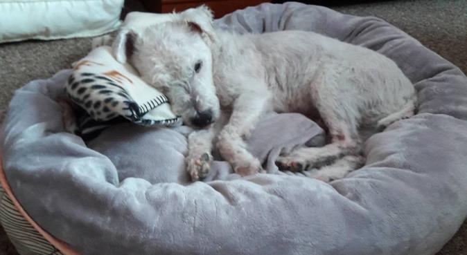 Nounou pour votre animal à proximité de Versailles, dog sitter à La Celle-Saint-Cloud