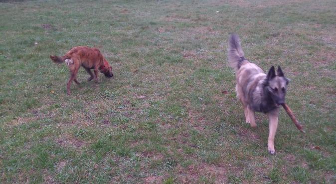 Garde et promenades à Parilly, dog sitter à Vénissieux