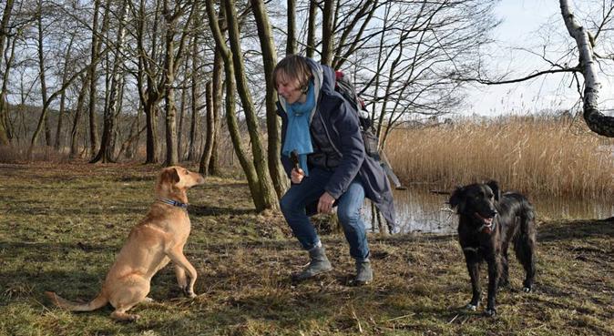 10405 Berlin: Entspannte Zeit für Sie UND Ihren Hu, Hundesitter in Berlin
