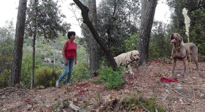 Actividad y diversión en plena naturaleza!!, canguro en Sant Cugat del Vallès, España