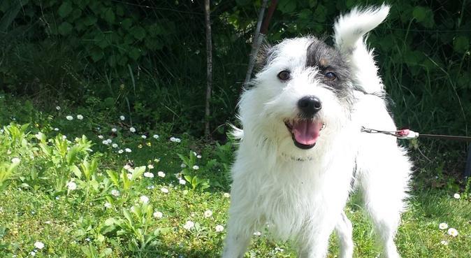 Educazione Metodo Gentile, esperienza e passione, dog sitter a Udine