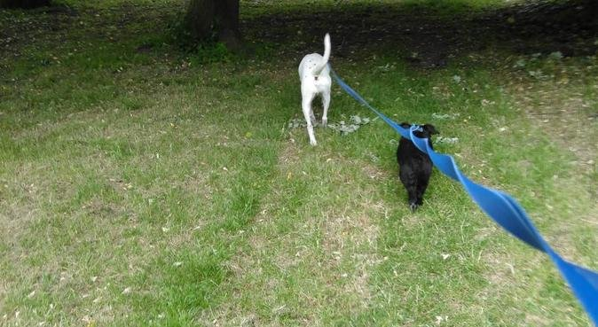 Reliable and trust worthy, dog sitter in Derby