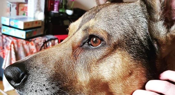 Des promenades qui plairont aux grands et petits!, dog sitter à DIJON