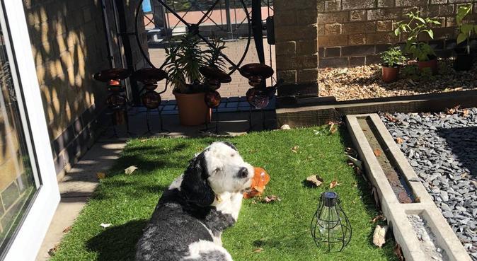 Lovely Walks, dog sitter in Londres