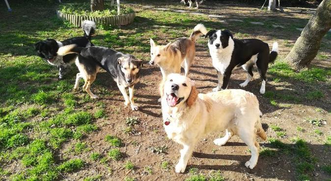 Coccole e divertimento con educatore cinofilo, dog sitter a Giugliano in Campania