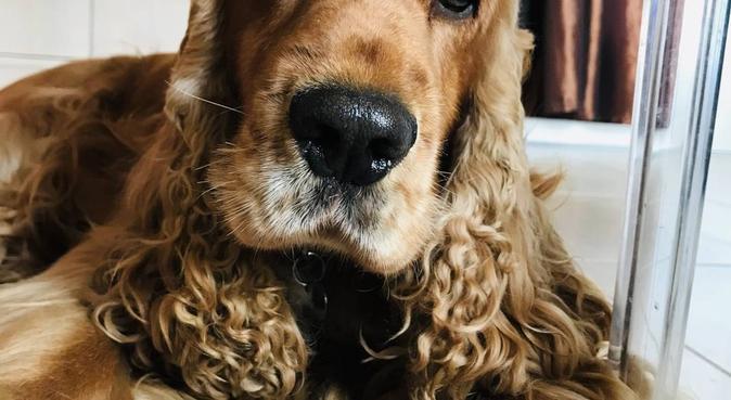 Il tuo peloso come un membro di famiglia, dog sitter a Abano Terme, PD, Italia