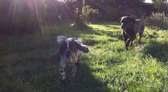 Un accueil familial pour votre compagnon, dog sitter à Bègles