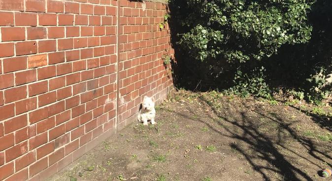 Coin de verdure pour bonheur des animaux 🌿🐶🐱, dog sitter à Talence