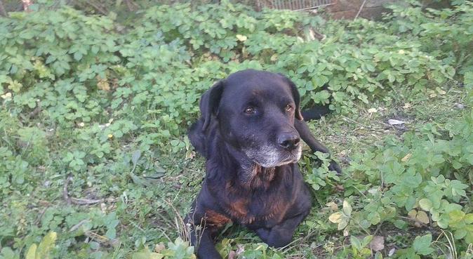 Balade au parc, jeux et câlins., dog sitter à Toulon