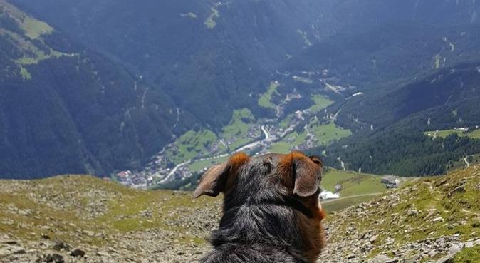 Affidabilità e divertimento per il vostro cucciolo, dog sitter a Mestre