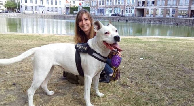 Garde de vos gentils et coquins toutous à Lille, dog sitter à Lille