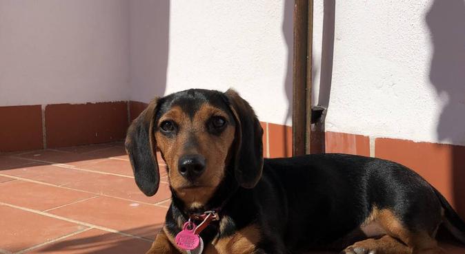 Villa mascotas: amor y descanso canino!, canguro en Córdoba, España