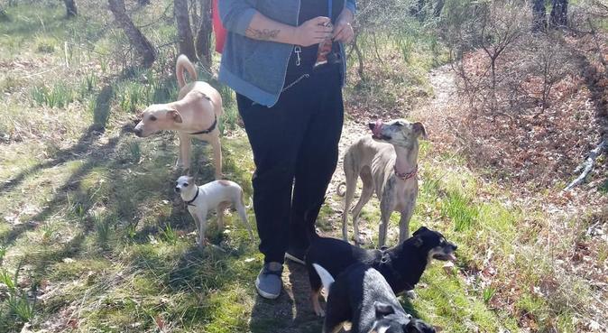 Guardería canina: mucho mejor que en casa 😉, canguro en Yuncos, España