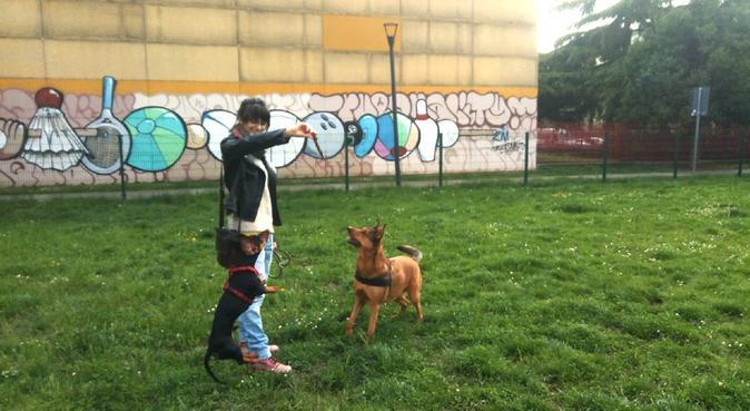 Tante coccole e divertimento, dog sitter a Brescia