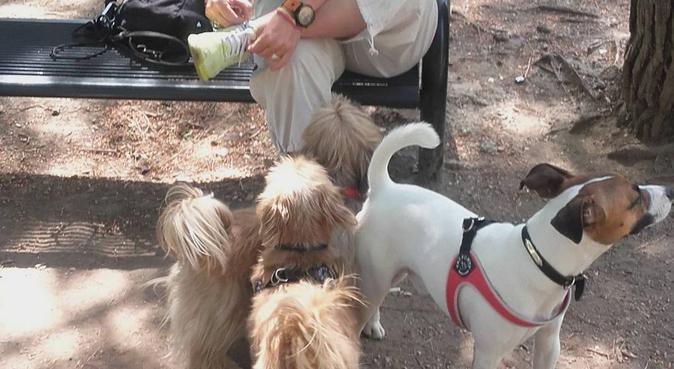 Un accueil familiale et personnalisé (CCAD obtenu), dog sitter à Marseille