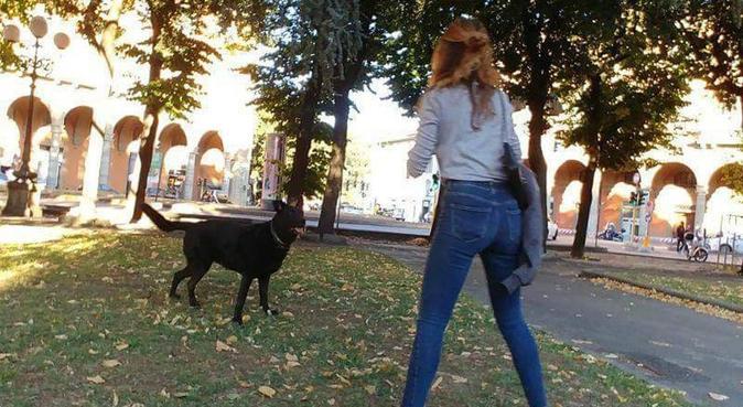 DOG LOVER tutto quello che serve al tuo cane, dog sitter a Firenze