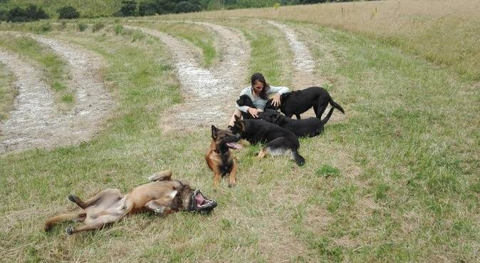 Friendly dog walker/sitter/trainer & home boarding, dog sitter in Chigwell